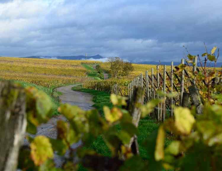 Route des vins DOC Lison-Pramaggiore